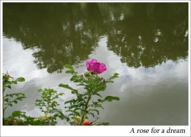 Breizh 11 - A rose for a dream by Metalelf0