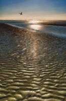 Mud Flats at Low Tide by cokehead666