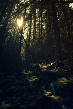 Forest by LastOfThePlagues