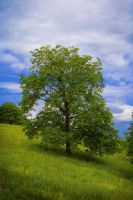 The Tree II by Callu
