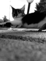 Out Of Focus by Menchix4
