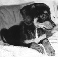 Charcoal drawing of a puppy by Valyanna8361
