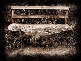Old Bench in Sepia by ks-photo