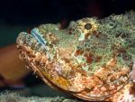 Tropical fish scorpionfish by MotHaiBaPhoto