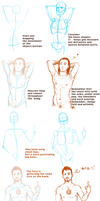 Avengers Anatomy Tutorial by Batwynn