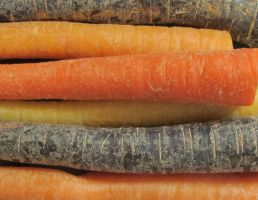 Colorful Carrots by Windthin