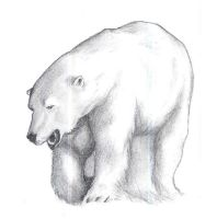 Polar Bear by Oron28