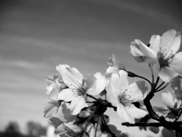 Blossom4 by luvBEX