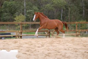 ASH leaping little jump canter by Chunga-Stock