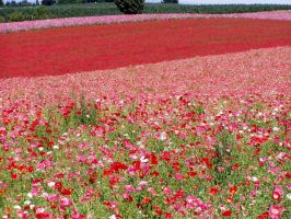 A Sea of Flowers by 7ANYA