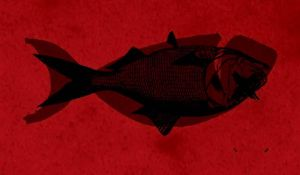 dead fishie by GeneralVyse