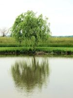 Willow Pond by tracy-Me