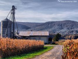 Harvest Time On The Farm by jim88bro