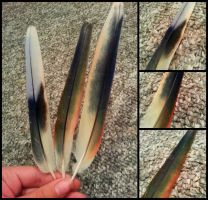 Eastern Rosella Feathers by RaptorFeather