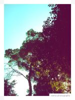 Blue Sky and Trees's Leaves III by Vianto