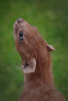 Least Weasel by fossilizedmouse