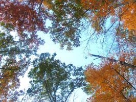 The Colors Of Fall by sasukes1gf4life