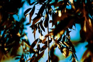 Leaves in the tree by oderycke