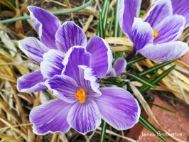 Sign Of Spring by jim88bro