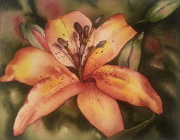 watercolor 2 - lilium by WonderAiLin