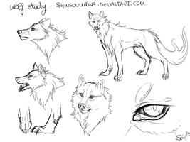 Wolf study - practice by SouOrtiz