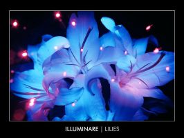 Lilies by haedes