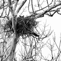 Mother Owl by clippercarrillo