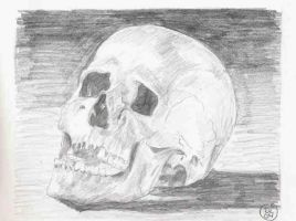 my first skull by Dinahleit