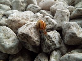 wee snail by harrietbaxter