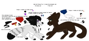 [PA] ref for the babes by pixiepup