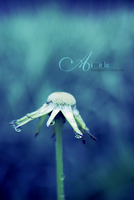 tears of a flower by Aimelle