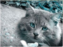 Stray Cat - Blue II by punksafetypin