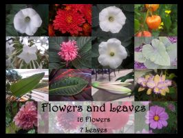 Flowers and Leaves by TatteredButterfly