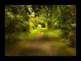 Old Forest Road by AlienShore