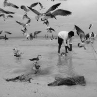 seagulls, mexico by i-shadow