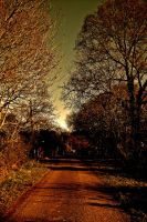 Country Lane by anyotherrose