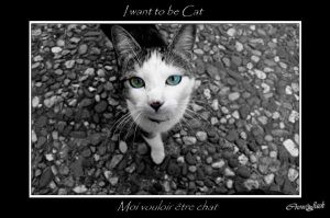 I WaNt To Be CaT by OniricScarecrow