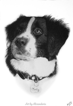 Monty - Charcoal drawing by Alexandoria