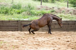 KM Old TB getting up side view 4 by Chunga-Stock