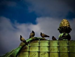Birds of sultanahmet by Masisus