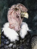 Andean Condor 3 by HouseofChabrier
