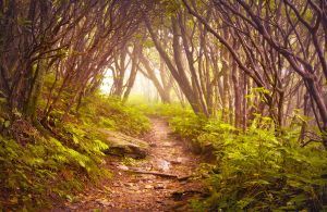 Purple and Green Forest Photoshop Action by presetsgalore