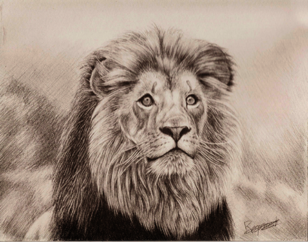 lion by Respeanut
