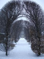 Snowy Day Stock -12 by Tefee-Stock