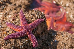 Starfish in colors summer by Tetelle-passion