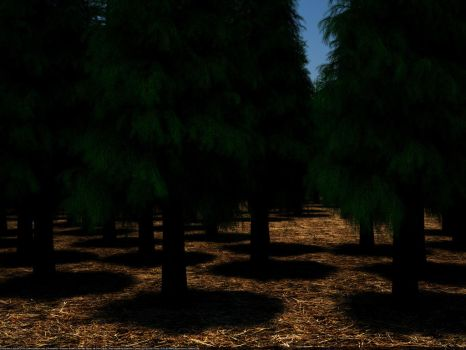 VRAY Proxy Forest Fir1 Test by Paulgswanson