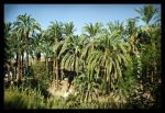 palms near luxor - egypt trip by kenpunk79