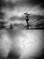 birds and lines by vovkas