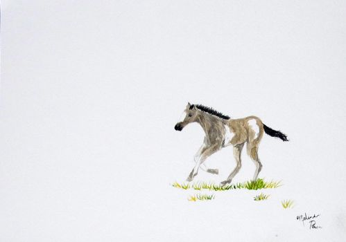 Running Foal by Melindotty