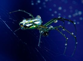 wet spider 01 by otas32